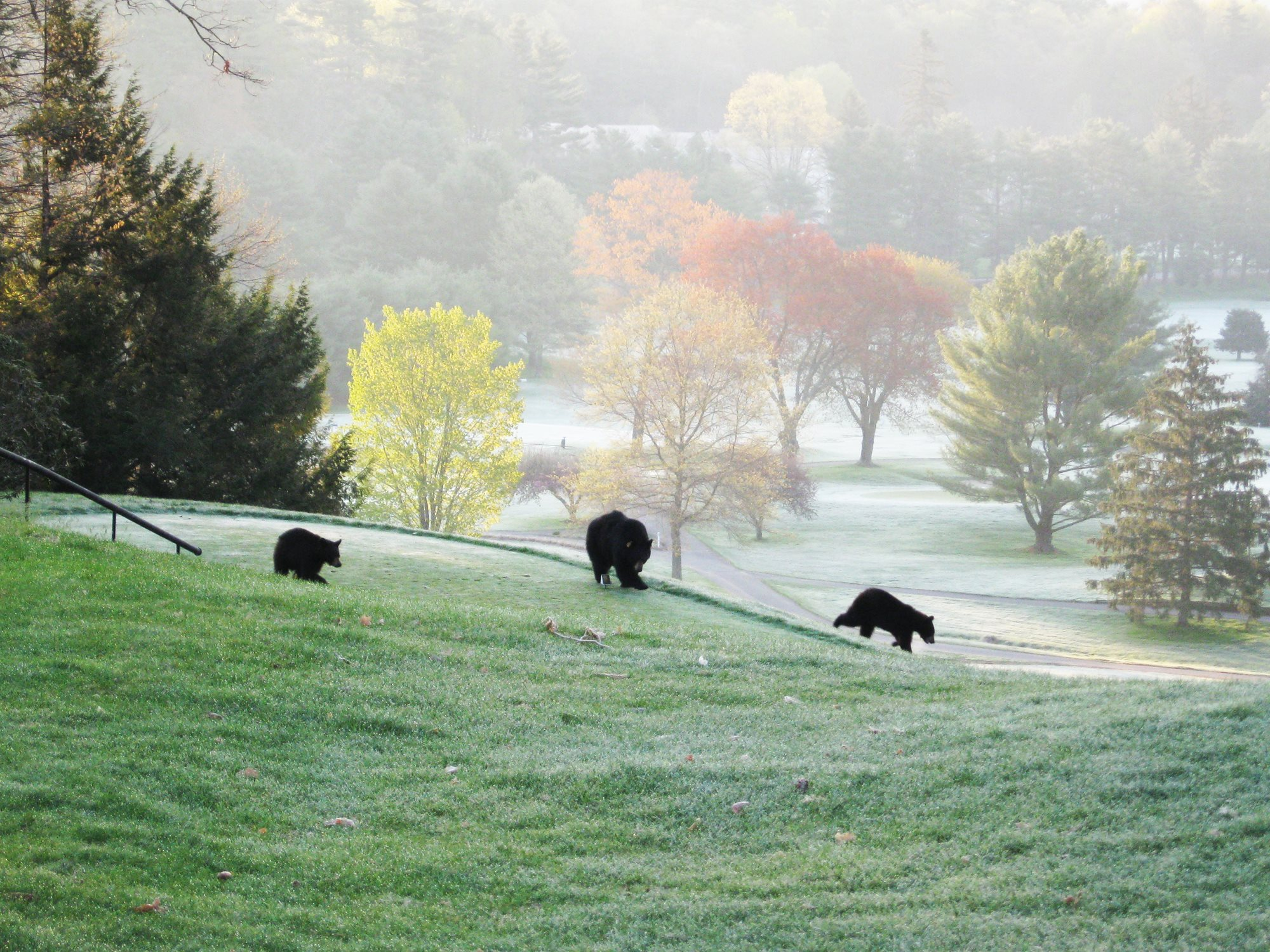 Mama_Bear_and_Cubs_on_HMCC_Course